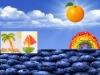 ken_food rainbow